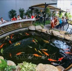 Khởi nghiệp thành công với mô hình nuôi cá Koi