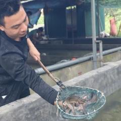 Người nuôi cá tầm đầu tiên ở huyện Trấn Yên