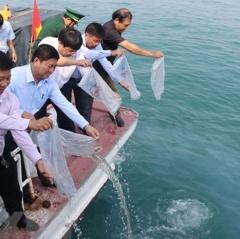 Thả hơn 10 vạn con tôm sú và cua giống xuống phá Tam Giang
