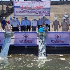 Thả cá giống tại hồ thủy điện Sông Ba Hạ