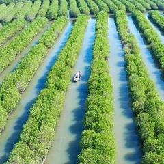 Chuẩn bị xử lý hộ dân lấn chiếm rừng phòng hộ đào ao nuôi thủy sản