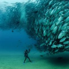 Làm thế nào cá có thể bơi theo đàn một cách hoàn hảo?