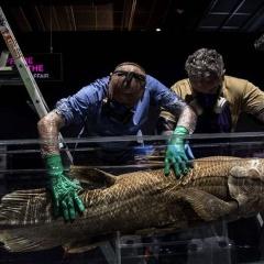 Loài cá bốn chân tuyệt chủng 420 triệu năm tuổi vẫn còn sống