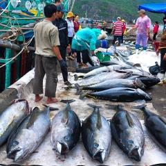 Xuất gần nửa tỷ USD thủy hải sản sang Mỹ trong 4 tháng đầu năm