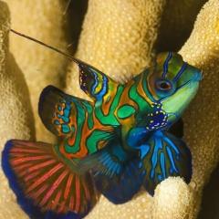 """Vẻ đẹp """"hút hồn"""" của các loài cá cảnh"""