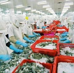 Ngành thủy sản tiếp tục đẩy mạnh liên kết trong sản xuất