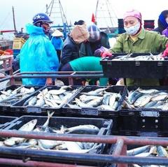 Hà Tĩnh đầu tư 400 tỷ đồng nâng cấp cơ sở hạ tầng nghề cá