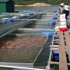 Bị phạt 400 triệu đồng vì lấn chiếm đất nuôi trồng thủy sản