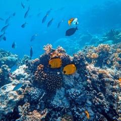 Bức tranh đại dương sinh động cùng với những sinh vật biển