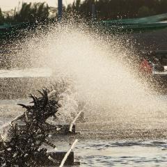 Giải pháp hiệu quả để kiểm soát khí độc trong ao nuôi tôm cá