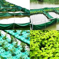 Aquaponics vòng hở: Nuôi rô phi, trồng diếp cá