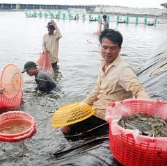 Sản lượng nuôi tôm biển tăng gấp 7 lần so với cùng kỳ năm 2020