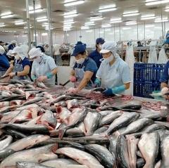 Trung Quốc - Thị trường xuất khẩu cá tra lớn nhất của Việt Nam