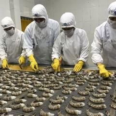 Giải pháp phát triển ngành tôm Việt Nam đến năm 2025