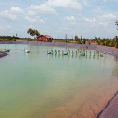 Phòng bệnh tổng hợp cho thủy sản nuôi trong vụ hè