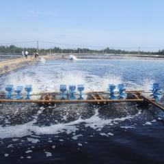 Bến Tre: Giá trị sản xuất ngành tôm đạt 1 tỷ USD vào năm 2025