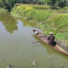Cá chết hàng loạt tại Thủy Tân