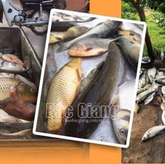 Nắng nóng kéo dài xuất hiện nhiều thủy sản bị chết