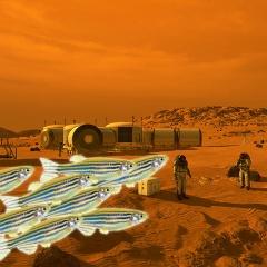 Cá ngựa vằn đưa chúng ta lên sao Hỏa?