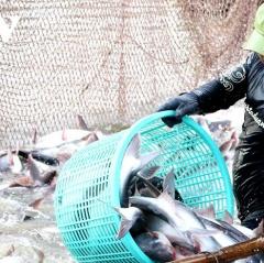 Nguồn cung cá thịt trắng toàn cầu năm 2021 sẽ tăng 4%
