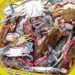 Ghẹ vuông chắc thịt không thua ghẹ biển!