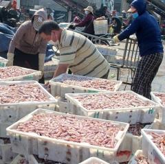 Hải sản ế ẩm khi các ca nhiễm Covid-19 ở Hà Tĩnh liên tục tăng
