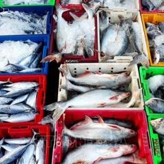 Mùa khai thác vụ cá Nam