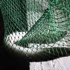 Khởi nghiệp với 4.000 con cá chình