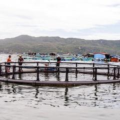 Mô hình nuôi cá bớp trong lồng tròn HDPE