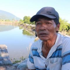 Khánh Hòa: Người nuôi tôm quảng canh thiệt hại nặng