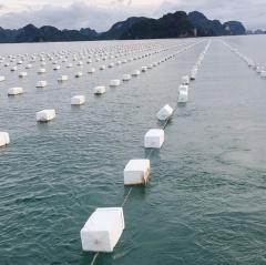"""Cách nuôi trồng thủy sản """"sạch và bền vững"""""""