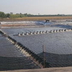 Thực trạng nuôi cá tra giống, tôm thẻ chân trắng ở Đồng Tháp Mười