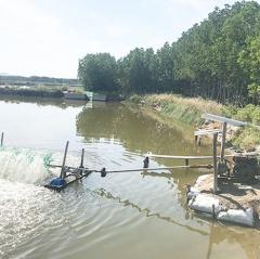 Những điều cần lưu ý cho thủy sản trong mùa nắng nóng