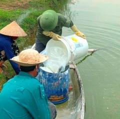 Bắc Trung Bộ: Nuôi tôm, ốc hương thiệt hại nặng do nắng nóng