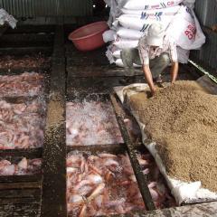 Vĩnh Long: Khó đầu ra, diện tích, sản lượng nuôi thủy sản giảm
