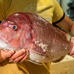 Tác động của hình dạng bể nuôi và sục khí đến ấu trùng cá tráp quy mô nhỏ