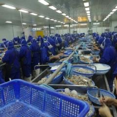 Xây dựng phương án 3 tại chỗ cho doanh nghiệp xuất khẩu thủy sản