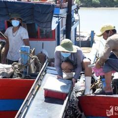 Ngư dân Nghệ An thu gần 2.000 tỷ đồng từ đánh bắt hải sản