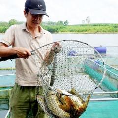 Một mô hình khép kín, vừa nuôi cá vừa kiêm luôn chủ nhà hàng