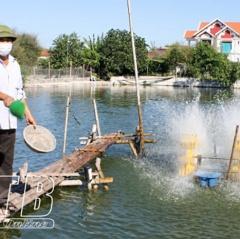 Mô hình nuôi cá chuối hoa đạt hiệu quả kinh tế cao