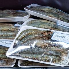 Ngược đời thủy sản đủ chuẩn xuất EU nhưng không vào được siêu thị trong nước