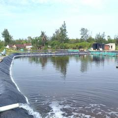 Suy kiệt nguồn nước ngầm do nuôi tôm