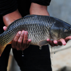 Giảm độc tính kim loại nặng ở động vật thủy sản