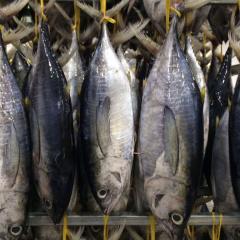 Chuyển hướng thị trường xuất khẩu cá ngừ