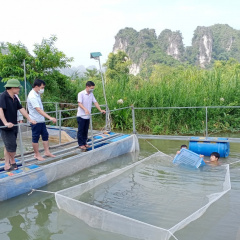 Lạng Sơn triển khai mô hình nuôi cá nheo Mỹ