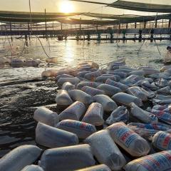 Trầm lắng thị trường giống thủy sản