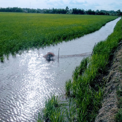 Liên Hiệp Quốc triển khai Chương trình liên kết chuỗi tôm - lúa bền vững tại Bạc Liêu