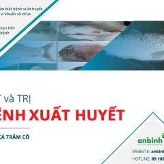 Bắt và trị bệnh xuất huyết trên cá trắm cỏ