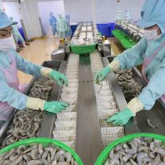 70% doanh nghiệp thủy sản đóng cửa, xuất khẩu lao dốc