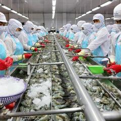 """Mở rộng các """"vùng xanh"""" cho sản xuất tôm xuất khẩu"""